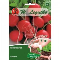 Rzodkiewka Carmesa nasiona na taśmie Legutko