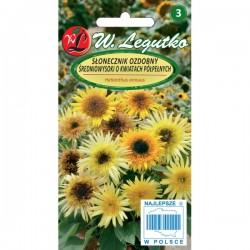 Słonecznik ozdobny średniowysoki o kwiatach półpełnych